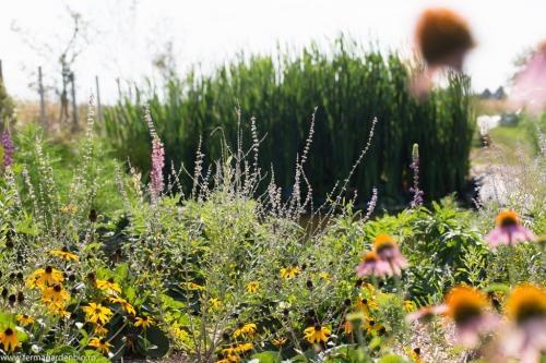Flori ce asigură nectar și polen insectelor