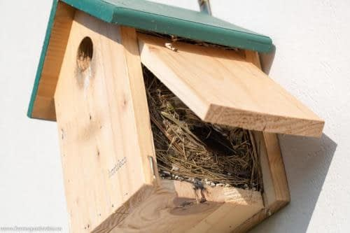 Cuib artificial - o nouă generație și-a luat zborul :)