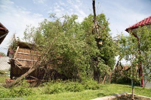 Forța furtunii a smuls copacii din rădăcină.
