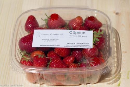 Căpșuni în caserolă biodegradabilă