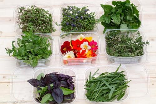 Plante aromatice: roiniță, mentă, isop, lavandă, busuioc, tarhon, salvie, rozmarin, nasturtium etc.