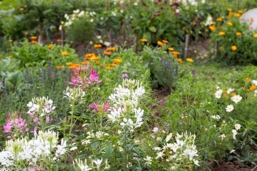 Flori ce atrag polenizatori