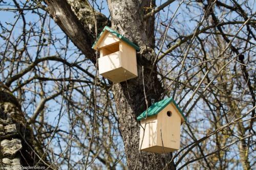 Cuibare păsări